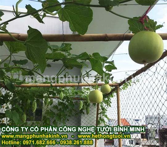 Cách làm giàn mướp - giàn trồng cây leo che nắng sân thượng