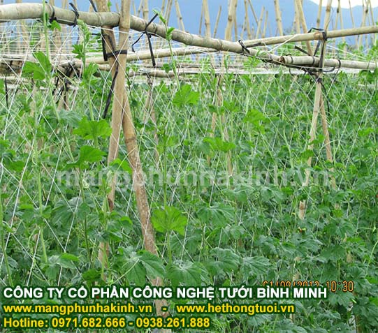 lưới giàn dây leo, lưới nông nghiệp