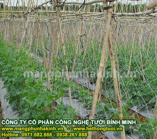 lưới cước làm giàn leo cây, giàn leo thông minh, lưới giàn dây leo, lưới giàn leo dành cho nhà vườn